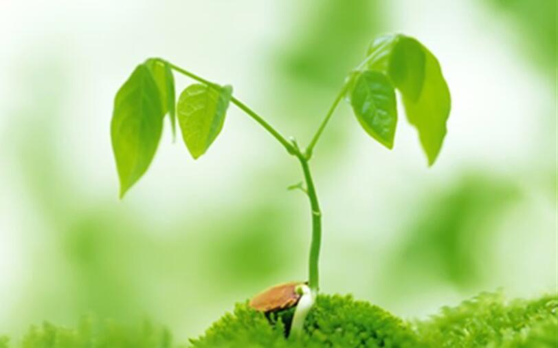 小树的新芽